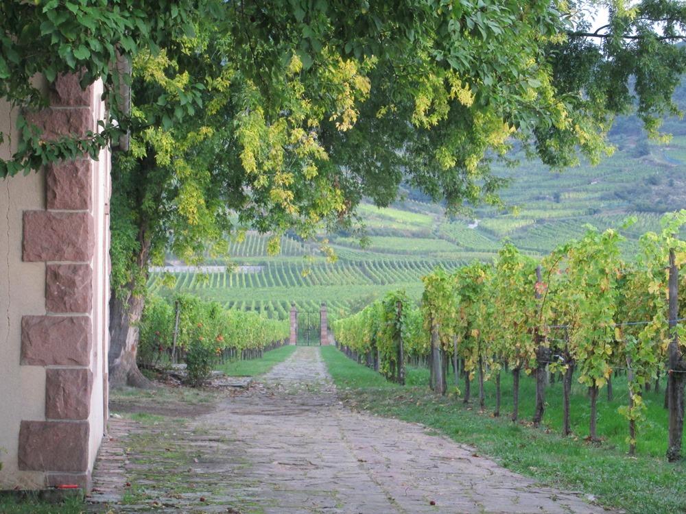 AlsaceAmbassadors Elzas Frankrijk wijn